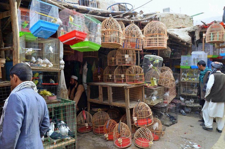 Kabul Ulica Ptaków