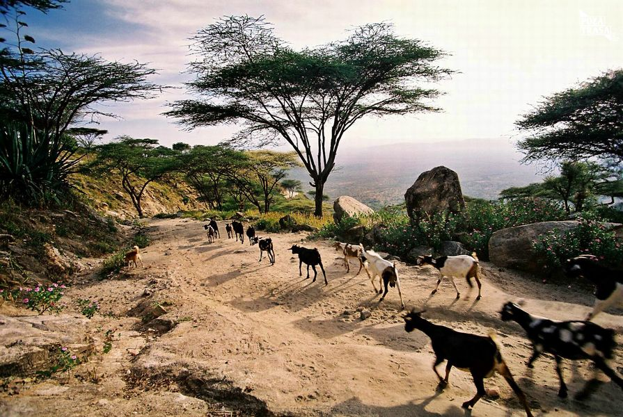 Tanzania Park Narodowy