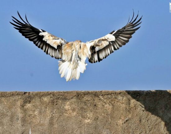 Przyroda Sokotra