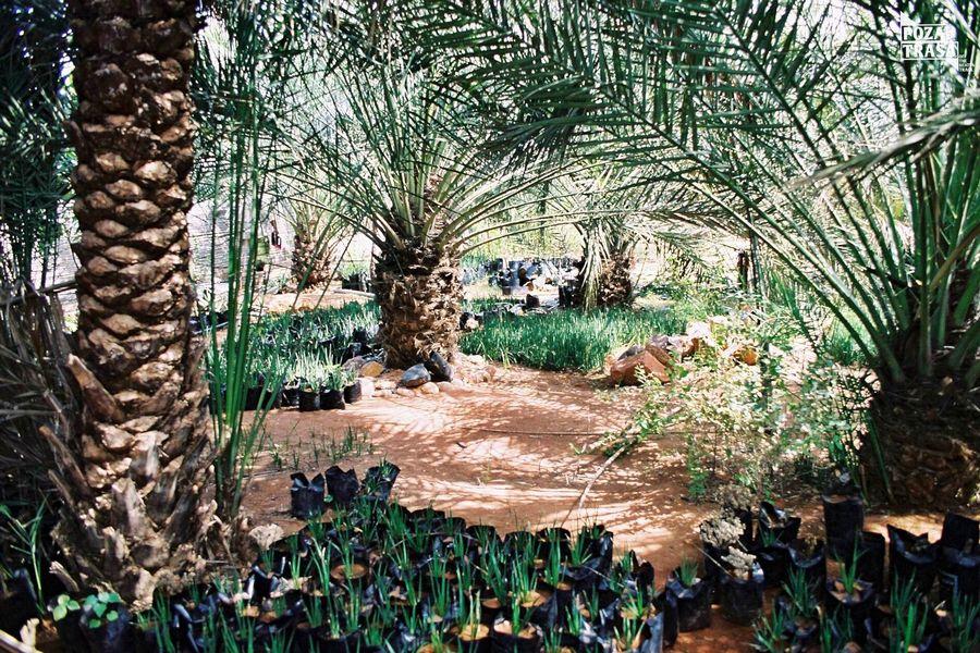 Sokotra wioska