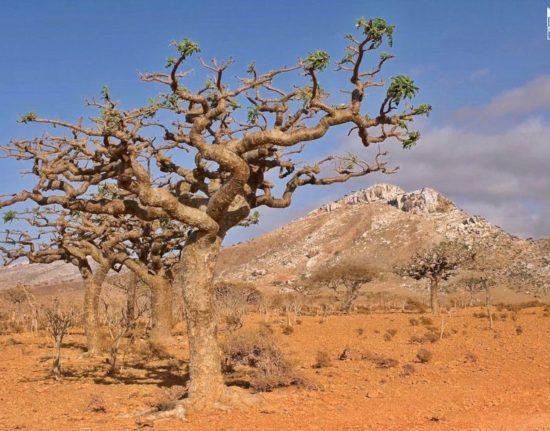 Sokotra endemiczne