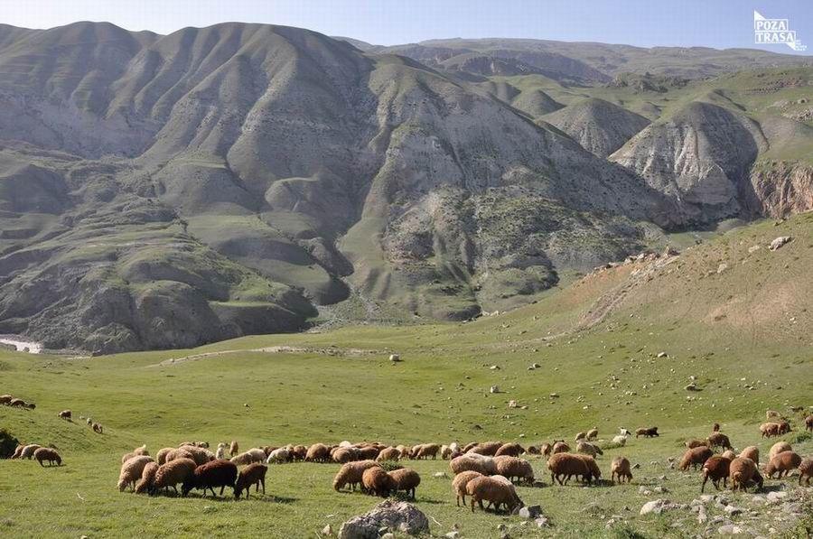 Azerowie w Iranie