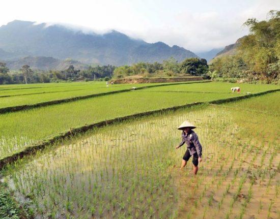 Wietnam północny