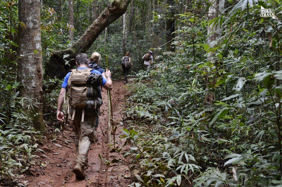 trekking dżungla