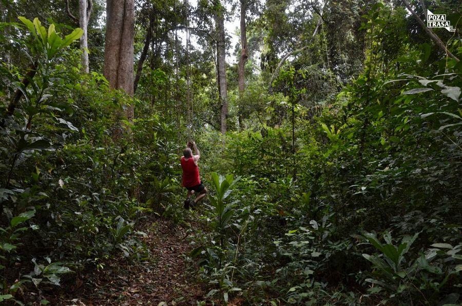 Dżungla Kambodża