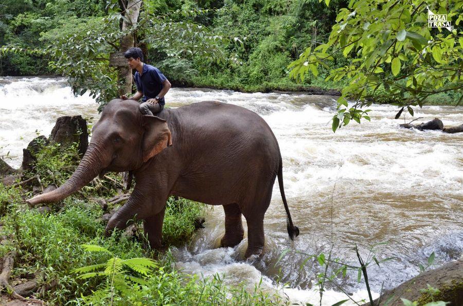 słoń Kambodża