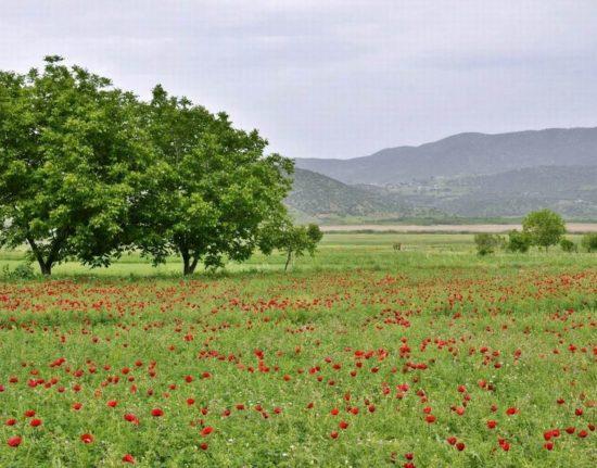 pola maku w Iranie
