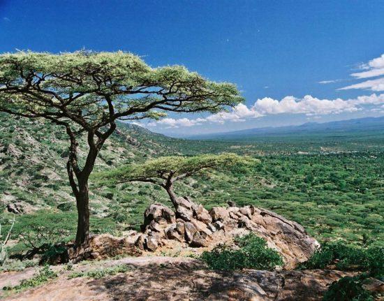 Safari Afryka