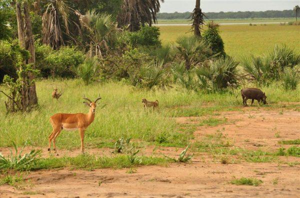 Safari Zambia Malawi