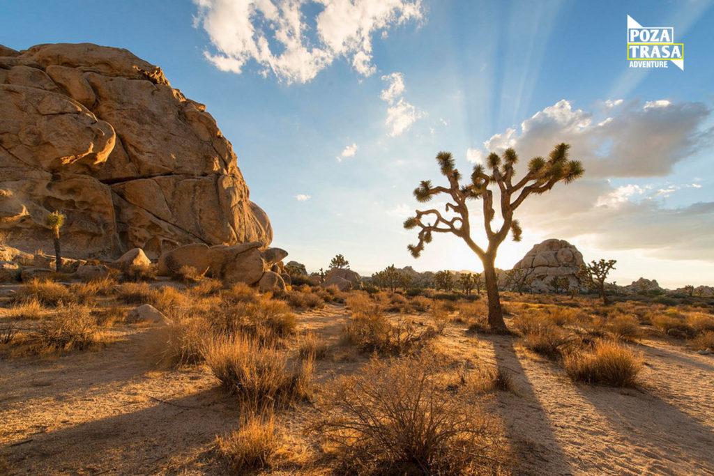Kalifornia wyprawa wakacje Joshua Tree