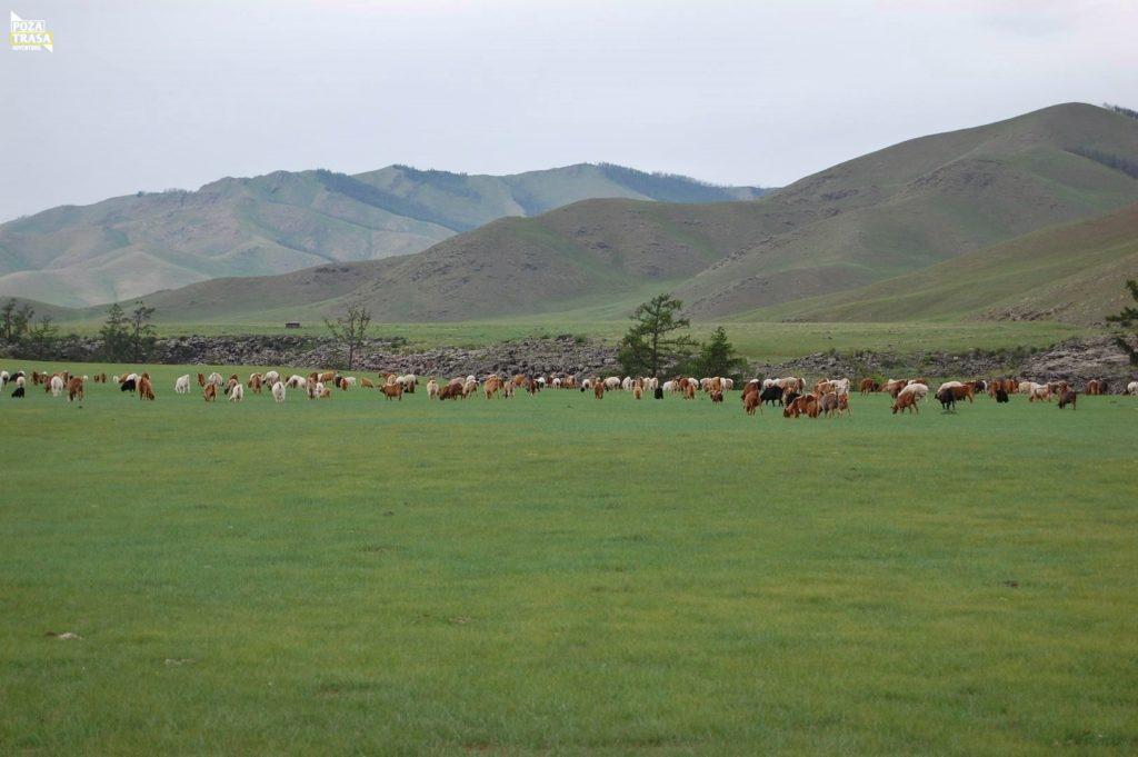 Mongolia wyprawa step konie
