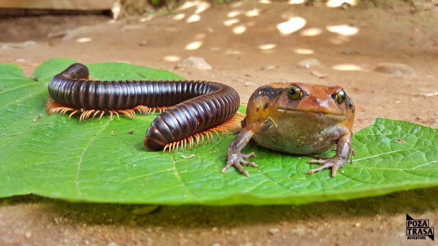 endemiczne gatunki