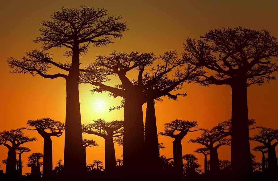 MADAGASKAR wyprawa podróż