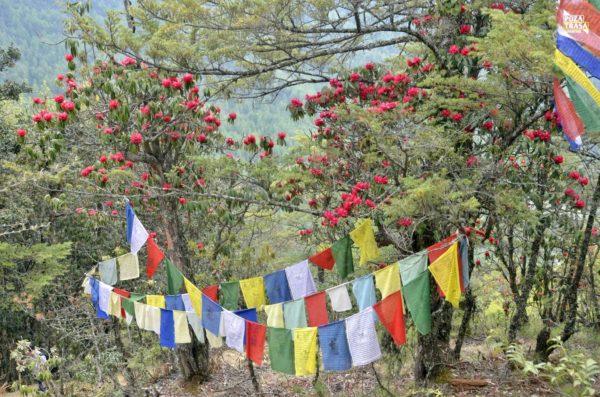 Nepal wycieczka
