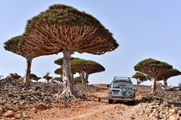 Sokotra wyjazd