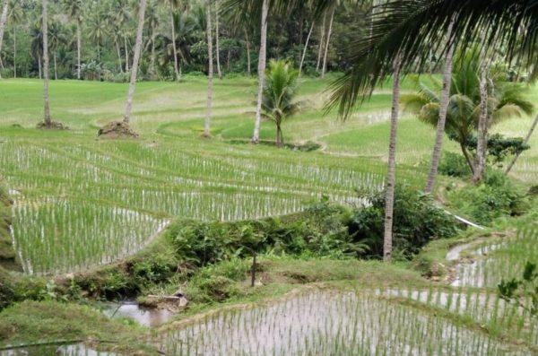 wakacje na filipinach