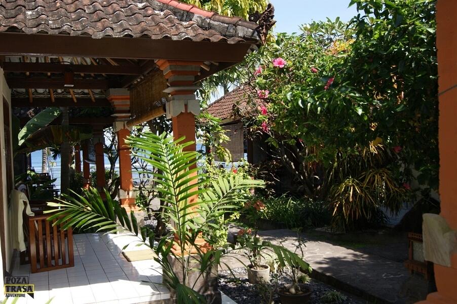 egzotyczne kwiaty Indonezji