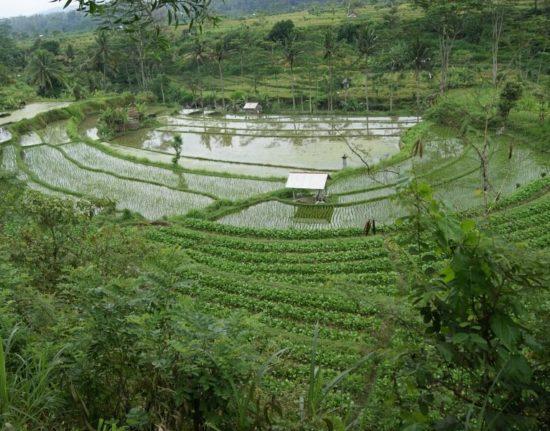 Wycieczka do Indonezji