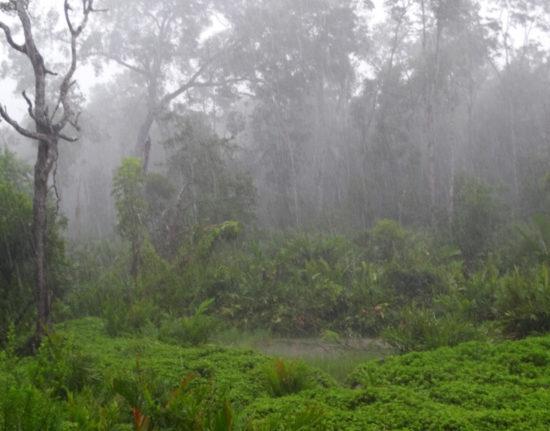 Park Narodowy Kinabalu