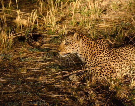 safari Malawi