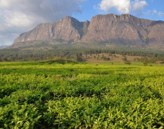 Malawi Zambia