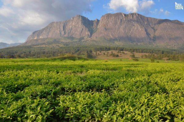 Zambia malawi