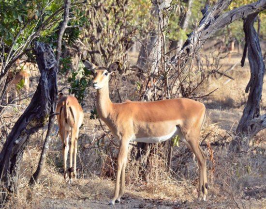 Zambia Malawi safari
