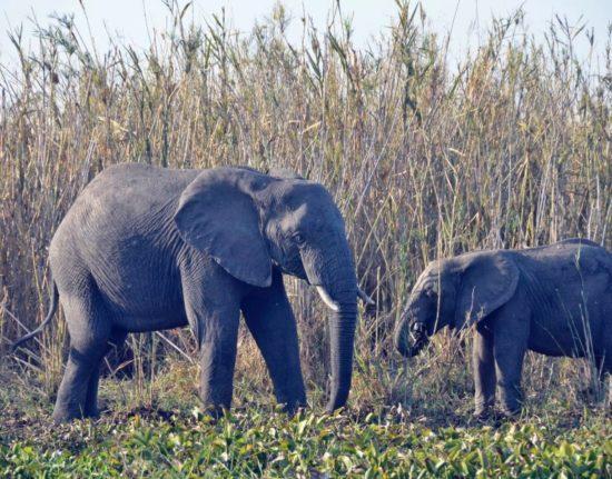 Malawi Zambia safari