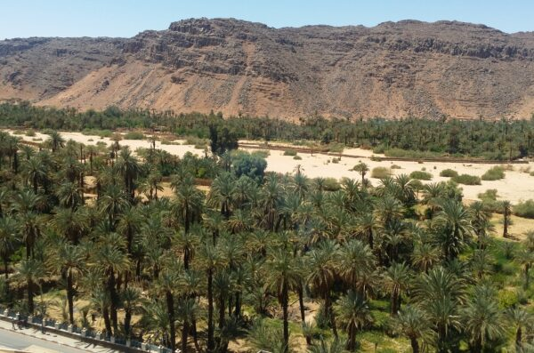 oaza Sahara