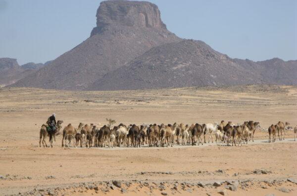 Algieria wyprawa Sahara