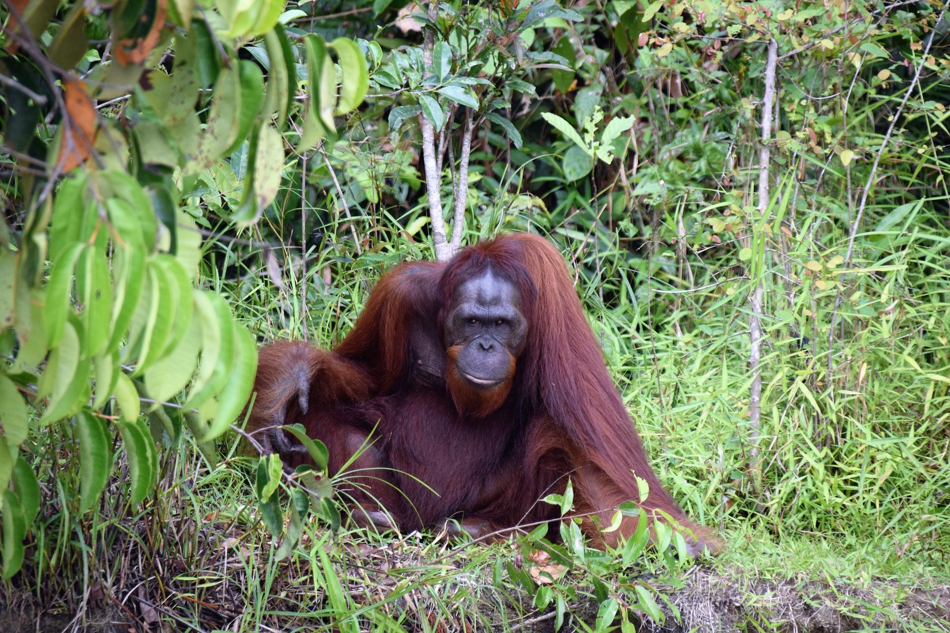 Borneo Malezja