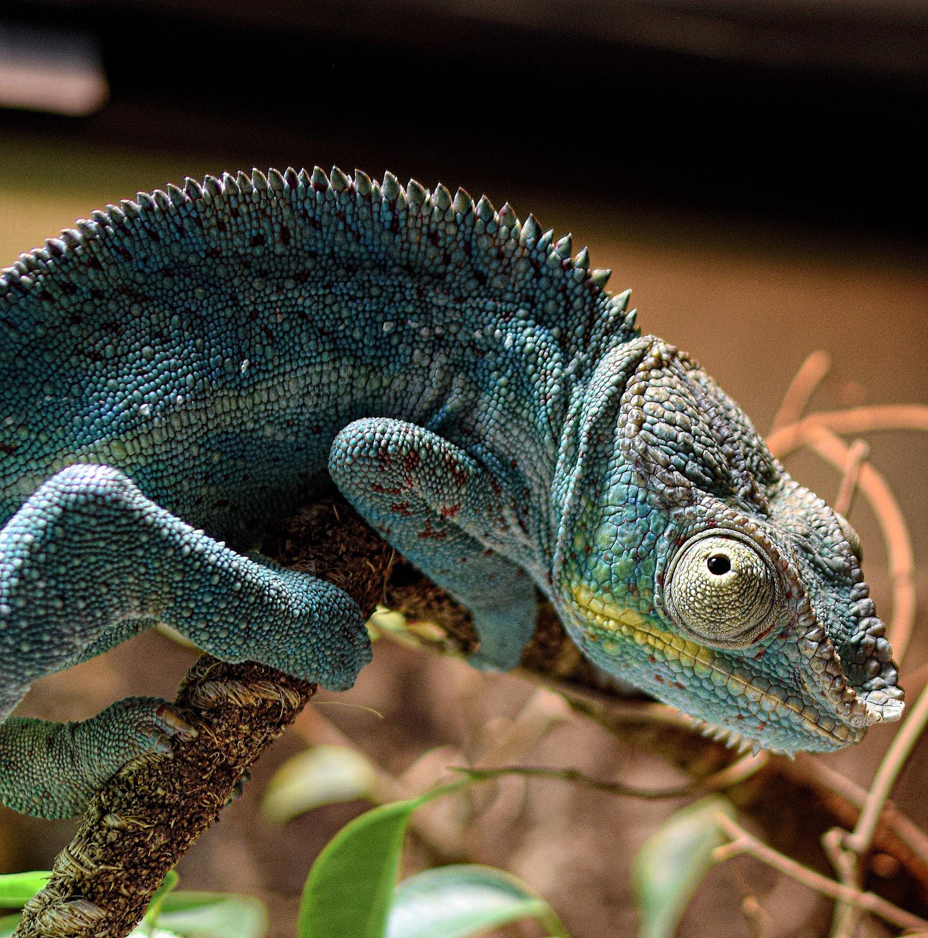 Madagaskar ciekawostki