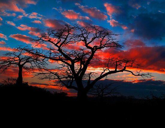 safari zachód słońca