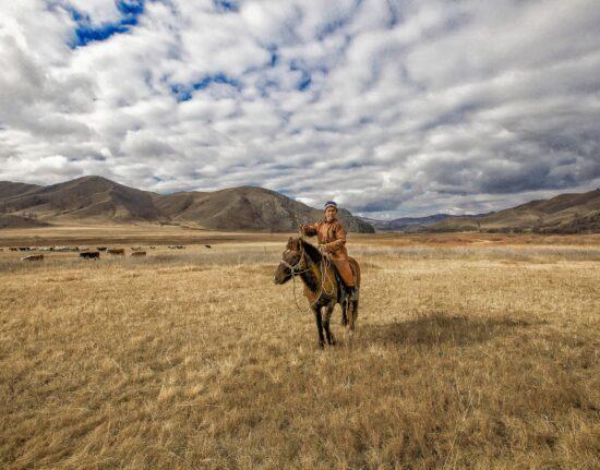 konno po Mongolii