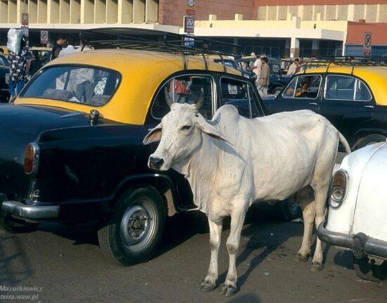 Indie północne wyprawa