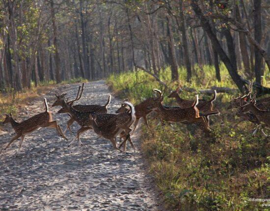 Park Narodowy Indie