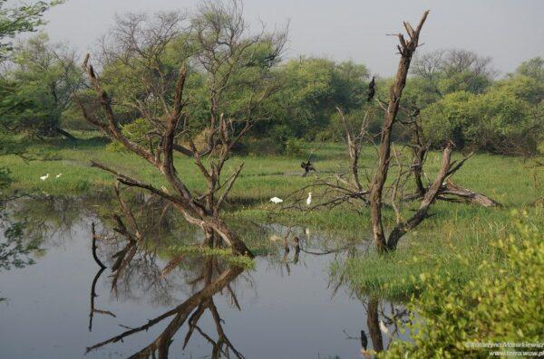 Park Narodowy Keoladeo