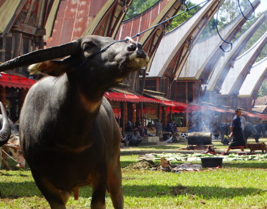 Toradża (Toraja) ceremonie pogrzebowe