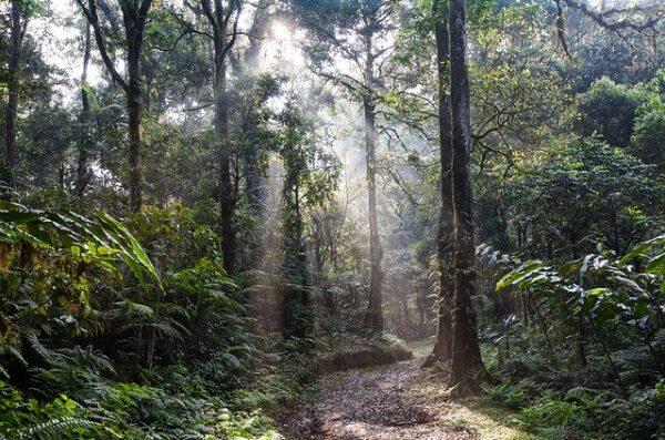 Indonezja dżungla