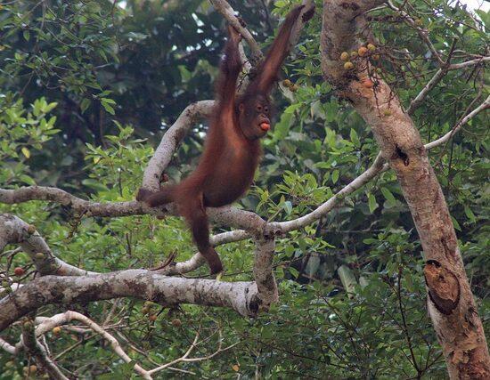 Wycieczka Indonezja Sumatra