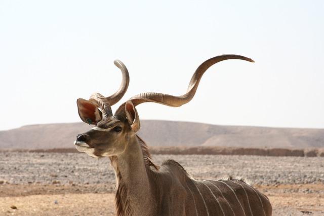 Somaliland Dżibuti Etiopia