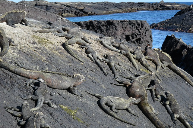 Galapagos Ekwador