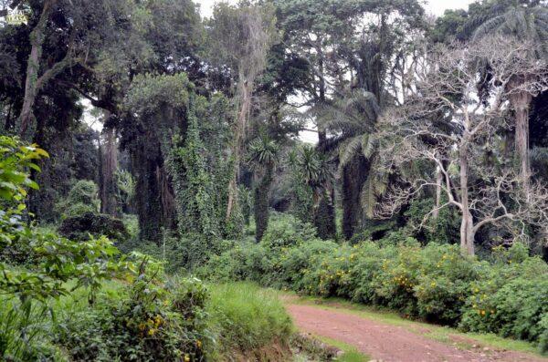 Ruwenzori Trekking Uganda Entebbe