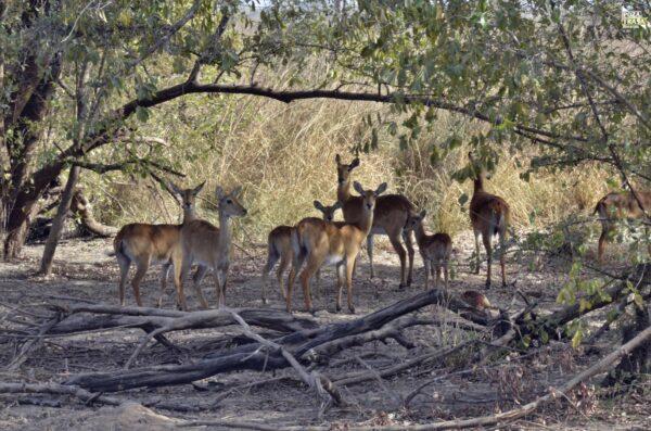 Benin Safari Pendjari cz.2