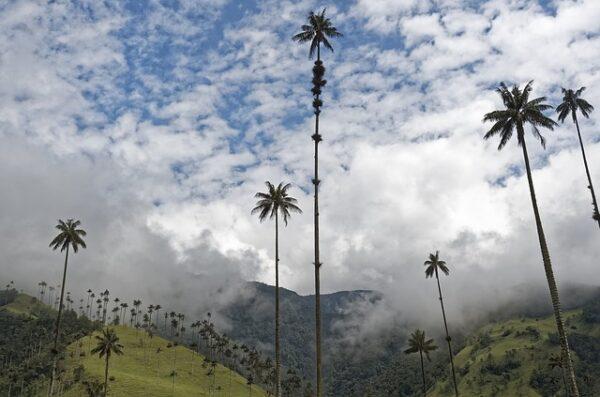 Kolumbia wyjazd Dla Aktywnych wycieczka do Kolumbii