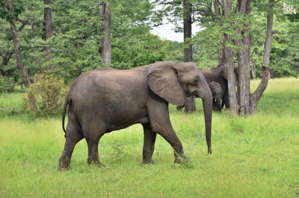 Malawi wyjazd Park Narodowy Liwonde Safari Malawi 2021