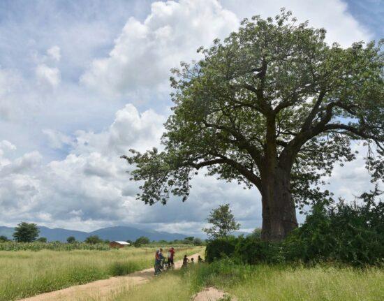 Malawi w Drodze Malawi 2021