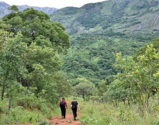 Malawi wyjazd Góry Mulanje (Mladżi) Trekking Malawi 2021