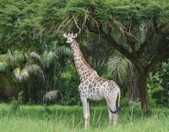 Mini Safari Malawi 2021