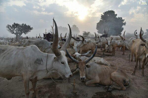 Mundari Poranek Sudan Południowy 2021 Wyprawa do Sudanu Południowego